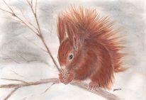 Eichhörnchen, Pastellmalerei, Winter, Tiere