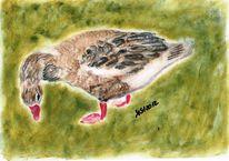 Tierzeichnung, Vogel, Portrait, Ente