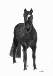 Pastellmalerei, Zeichnung, Pferde, Pony