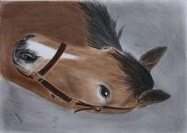 Zeichnung, Portrait, Pferde, Pastellmalerei