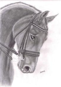 Grafit, Portraitzeichnung, Tiere pferd, Zeichnung
