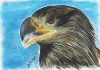 Vogel, Augen, Tierportrait, Pastellmalerei