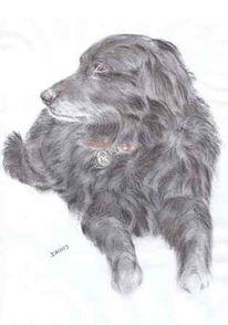 Hund, Tiere, Zeichnung, Tierportrait