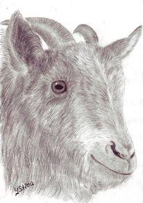 Portrait, Tierzeichnung, Augen, Tiere