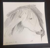 Kopf, Pferde, Tiere, Nüstern