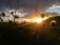 Abend, Sonne, Gras, Wolken