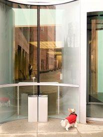 Im museum, Für hunde, Kein eintritt, Biewer terrier