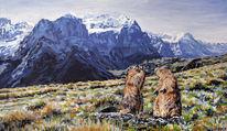 Tiere, Murmeltier, Berge, Alpen