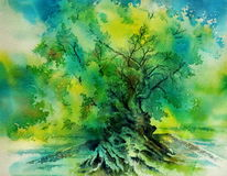 Oliv, Griechenland, Aquarellmalerei, Vouves