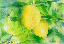 Zitrone, Obst, Gelb, Aquarell