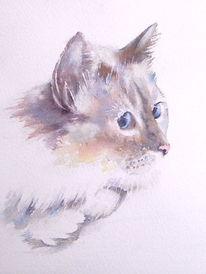 Aquarellmalerei, Katze, Weiß, Aquarell
