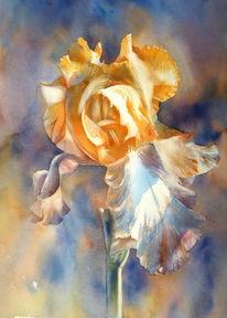 Zwiebeln, Iris, Schwertlilie, Blumen