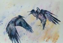 Rabe, Aquarellmalerei, Vorvid, Vogel