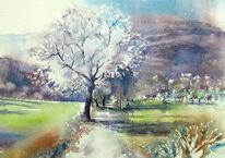 Kirschbaum, Aquarellmalerei, Frühling, Staffelberg