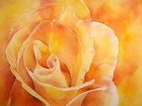 Lachsfarben, Aquarellmalerei, Rose, Blumen