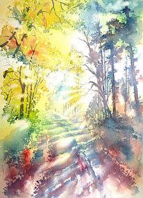 Licht und schatten, Herbst, Landschaft, Wald