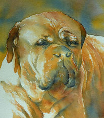 Hundeaugen, Aquarellmalerei, Hund, Portrait