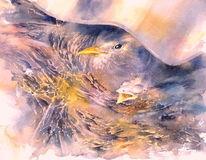 Vogel, Amsel, Nest, Aquarellmalerei