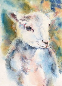 Lamm, Tierwohl, Aquarellmalerei, Tiere