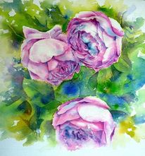 Rose, Aquarellmalerei, Old english rose, Purpur