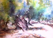 Olivenbaum, Aquarellmalerei, Olive grove, Mallorca