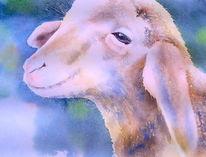 Schaf, Schlacht, Lamm, Slaughter