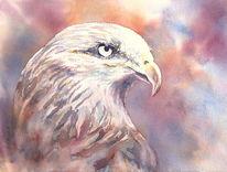 Aquarellmalerei, Roter milan, Vogel, Greifvogel