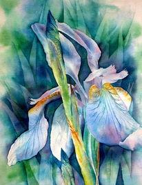 Iris, Blumen, Aquarellmalerei, Schwertlilie