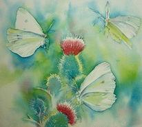 Blühen, Aquarellmalerei, Kohlweißling, Distel