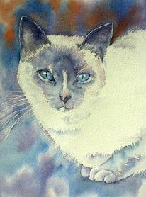 Katze, Schnurrhaare, Aquarellmalerei, Tiere