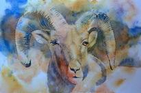 Widder, Bergschaf, Aquarellmalerei, Mountain sheep