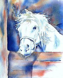 Mähne, Schimmel, Pferde, Aquarellmalerei
