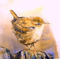 Vogel, Aquarellmalerei, Singvogel, Zaunkönig