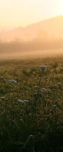 Pflanzen, Natur, Landschaft, Fotografie