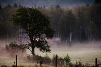Landschaft, Moor, Fotografie, Nebel