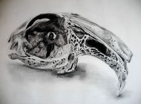 Schädel, Zeichnungen