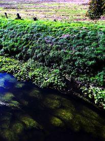 Fotografie, Wiese, Grün, Wasser