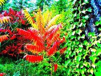 Gelb, Herbst, Grün, Wald