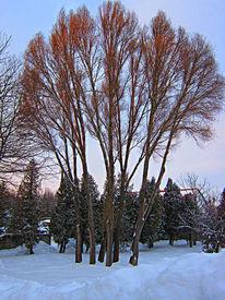 Natur, Baum, Winter, Fotografie