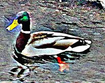 Ente, Vogel, Natur, Digitale kunst