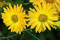 Blumen, Gelb, Pflanzen, Fotografie