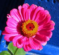 Natur, Blumen, Pflanzen, Fotografie