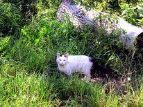 Natur, Katze, Fotografie, Tiere