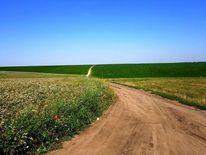 Natur, Weg, Feld, Buchweizen