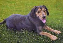 Hund, Ölmalerei, Natur, Portrait