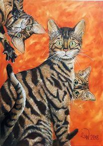 Katze, Orange, Große augen, Bengalenkatzen