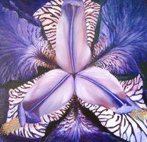 Blau, Iris, Irisblüte, Violett