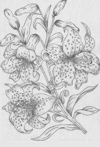 Blumen, Pflanzen, Lilie, Blüte