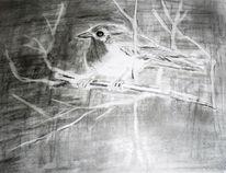 Rotkehlchen, Vogel, Bleistiftzeichnung, Zeichnungen