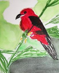 Rot, Vogel, Auarellfarben, Tuschestift